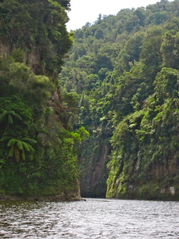 Wanganui River Tributary